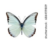 Small photo of Chocolate Albatross (Appias lyncida vasava) fine pale green to white butterfly upper part wings in natural color details isolated on white background