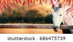 Beautiful Gray Horse Head At...