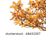 yellow leaves on the branches... | Shutterstock . vector #68652307
