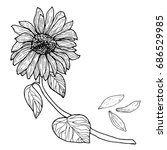 Black White Sunflower On A...