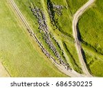 aerial drone view of sheep herd ... | Shutterstock . vector #686530225