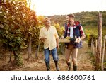 vineyard and ripe grapes ... | Shutterstock . vector #686600761