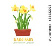 spring flower in flower pot.... | Shutterstock .eps vector #686632015