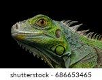 Close Up Head Of Reptile  Youn...