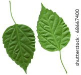 Two Piece Of Leaves Isolated I...