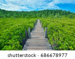 nature trails in mangroves. | Shutterstock . vector #686678977