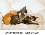 Stock photo litter of kittens sleeping napping resting 68669104
