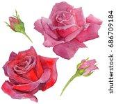 wildflower rosa flower in a... | Shutterstock . vector #686709184