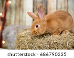 Red Haired Funny Little Bunny...