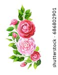 camellia flowers and leaves... | Shutterstock . vector #686802901