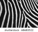 Pattern Of A Zebra Skin