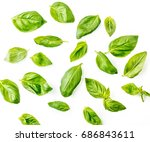 basil leaves on white... | Shutterstock . vector #686843611