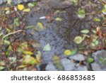 Leaves Lie In A Puddle On A...