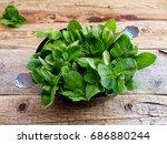 fresh aromatic herbs  mint on... | Shutterstock . vector #686880244