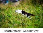 Stock photo hunting cat jumping through grass 686884999