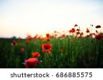 beautiful field of red poppies... | Shutterstock . vector #686885575