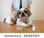 female veterinarian and shih... | Shutterstock . vector #686887819