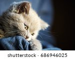 Stock photo cute little kitten 686946025