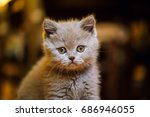Stock photo cute little kitten 686946055