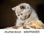 Stock photo cute little kitten 686946085