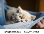 Stock photo cute little kitten 686946955