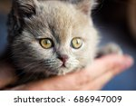 Stock photo cute little kitten 686947009