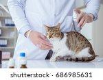 cat visiting vet for regular...   Shutterstock . vector #686985631