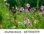 Beautiful Meadow Field With...