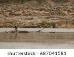 indian gavial in the nature... | Shutterstock . vector #687041581