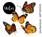 vector orange butterflies... | Shutterstock .eps vector #687104101