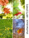 beautiful flowers  berries and... | Shutterstock . vector #687119491