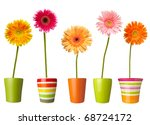 collection of  daisy flower on...   Shutterstock . vector #68724172
