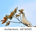white cockatoo on tree branch | Shutterstock . vector #68730505