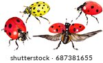 exotic ladybug wild insect in a ... | Shutterstock . vector #687381655
