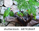 Small photo of Red Crowned Amazon parrots