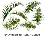 leaves  isolated on a white... | Shutterstock .eps vector #687426805