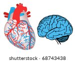human heart and brain   Shutterstock .eps vector #68743438