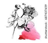 hand drawn botanical art... | Shutterstock .eps vector #687437659