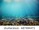 underwater coral reef on the... | Shutterstock . vector #687484471