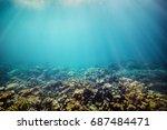 underwater coral reef on the... | Shutterstock . vector #687484471