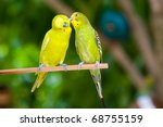 Couple Of Parrots On A Branch...