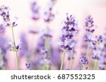 lavender flowers on a white... | Shutterstock . vector #687552325