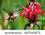 hummingbird eating red flowers | Shutterstock . vector #687565675