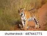 choti thara and her cub  tadoba | Shutterstock . vector #687661771