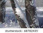 Winter Scene In The Northeast...