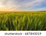 scene of sunset on the field... | Shutterstock . vector #687843019