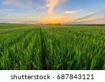 scene of sunset on the field... | Shutterstock . vector #687843121