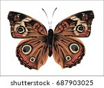 realistic vector butterfly  ... | Shutterstock .eps vector #687903025