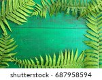 Frame From Fresh Fern Leaves On ...