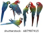 set of macaw isolated on white... | Shutterstock . vector #687987415